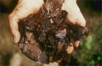 composting