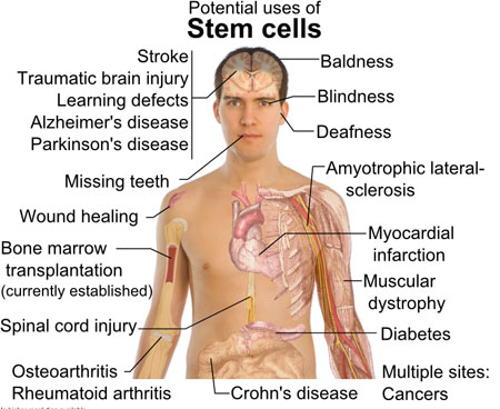 stem-cell-benefits