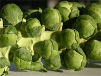 brussel-sprouts-pd