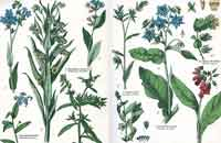 borage-pd