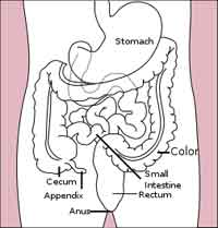 colon-stomach-pd