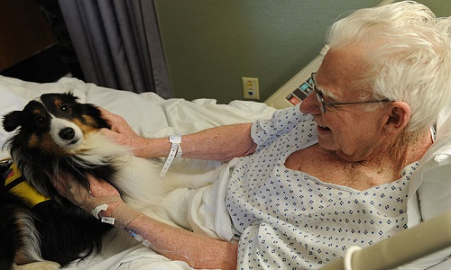 640px-Langley_therapy_dog